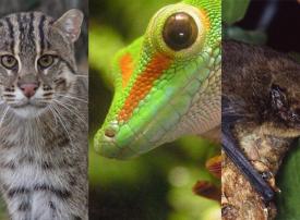 حيوانات انقرضت في عام 2017