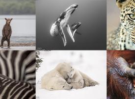 صور مذهلة من مسابقة مصور الحياة البرية
