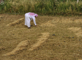 السعودية تستعين بالأقمار الصناعية لمنع زراعة الأعلاف
