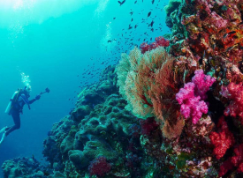 بالصور: أفضل 10 وجهات الغوص في العالم
