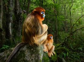 شاهد الصور الفائزة بمسابقة مصور الحياة البرية