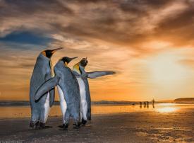 الصور المرشحة للفوز بمسابقة مصور الحياة البرية