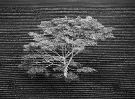 الصور الفائزة بجائزة الحياة البرية