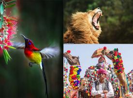 أفضل 15 صورة مشاركة في مسابقة صور تُظهر جمال العالم