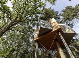 بالصور : فندق فاخر على قمة الأشجار