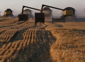 لأول مرة.. روسيا تحصل على إذن لتصدير القمح إلى السعودية