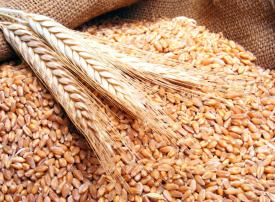 الرياض: شراء 10% من احتياجات القمح من شركات يسيطر عليها سعوديون