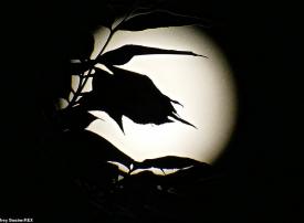 قمر الحصاد يضيئ سماء الأرض و الكرة بعد 30