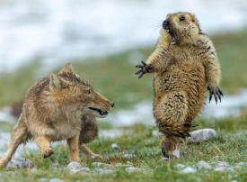 صورة مذهلة من مسابقة مصور الحياة البرية 2019