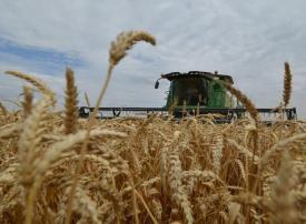 مصر تهدف لزراعة 3.5 مليون فدان قمحا في الموسم القادم