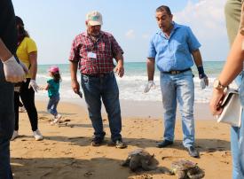 فيديو: مبادرة شبابية صديقة للبيئة لحماية السلاحف البحرية والتنوع الحيوي في سوريا