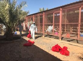 السعودية: تسجيل أول إصابة بإنفلونزا الطيور في الرياض