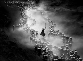 شاهد : أجمل الصور المشاركة بجائزة سوني العالمية 2020
