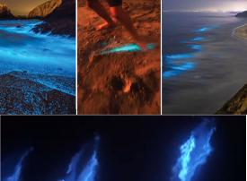 شاهد الدلافين والشواطئ المتلألئة تغري أمريكيين على انتهاك قواعد التباعد الاجتماعي