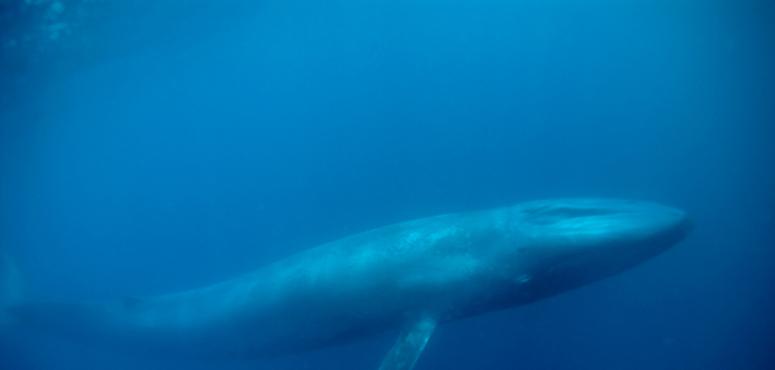 الحوت الأزرق يغزو الترند السعودي والمصري