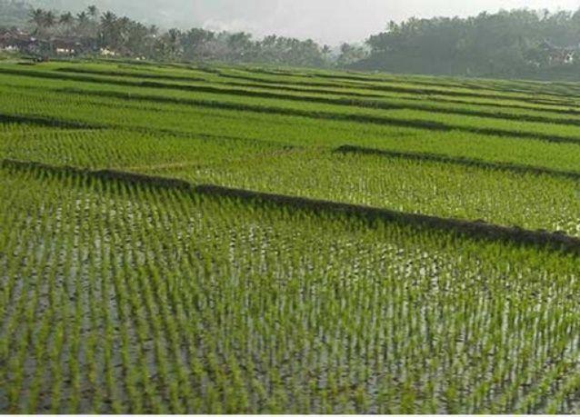 ملياردير سعودي يعيد إطلاق مشروع بقيمة 100 مليون دولار لزراعة الأرز في أثيوبيا