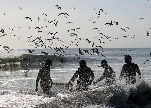 2.5 مليار درهم واردات الإمارات من الأسماك في عامين