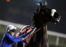 مونتروسو يهدي الإمارات لقبها الثامن في كأس دبي العالمية للخيل