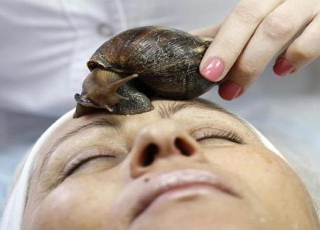 بالصور: الحلزون الإفريقي العملاق وصفة مميزة للجمال
