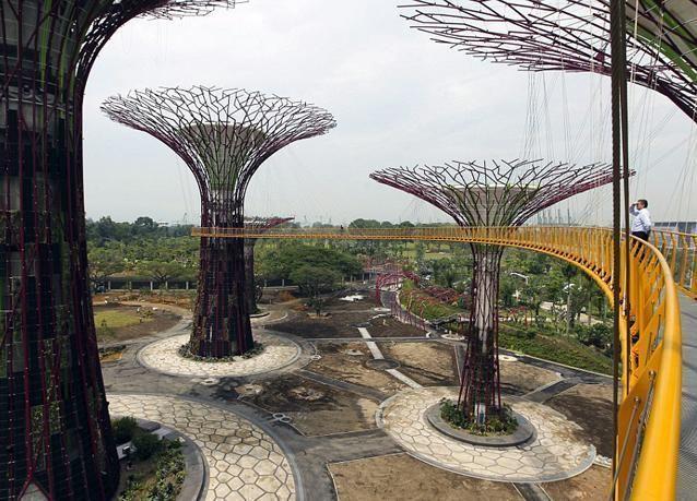 صور غابة الأشجار الشاهقة في سنغافورة