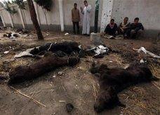 سلالة جديدة من الحمى القلاعية تنتقل من مصر إلى غزة