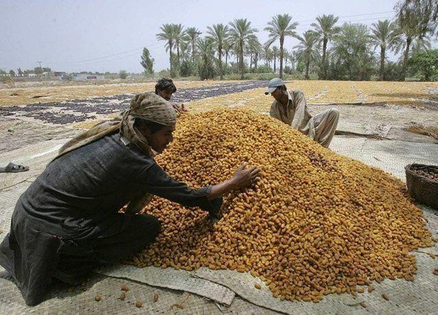 بالصور: التمر.. فاكهة شهر رمضان