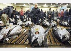سمكة تونة يابانية تباع بـ 1.7 مليون دولار في المزاد