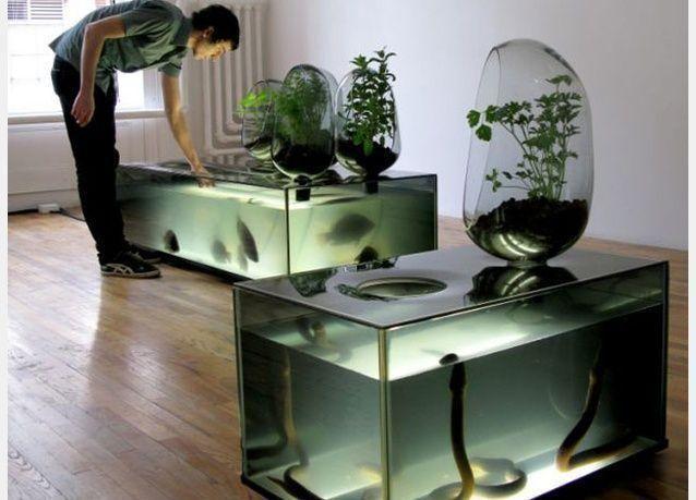 بالصور: تقنية زراعة الخضار والأسماك في المنزل