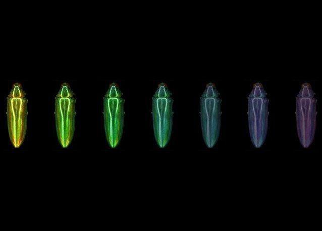 بالصور: كيف كانت ألوان الديناصورات
