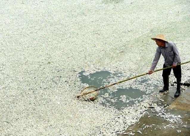 """بالصور:  اسماك ميتة تطفو على نهر """"فوخه"""" بوسط الصين"""