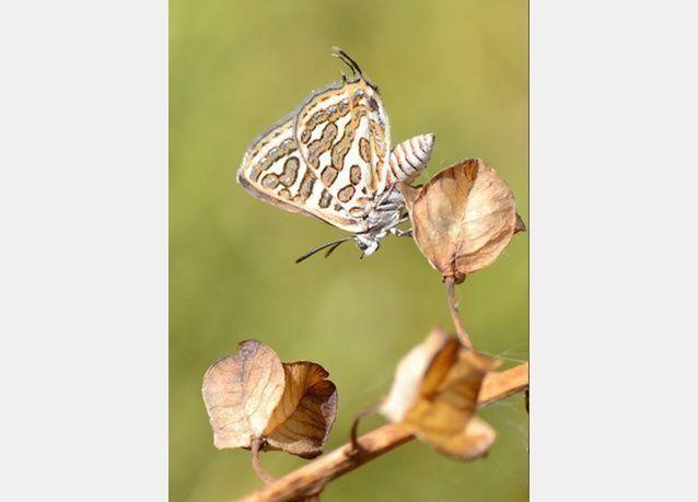 الأعمال الفائزة في مسابقة بريطانية لصور الطبيعة 2013