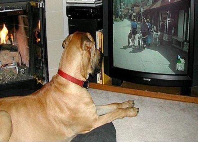 الكلاب تفسر الكلام ونبرة الصوت مثل البشر