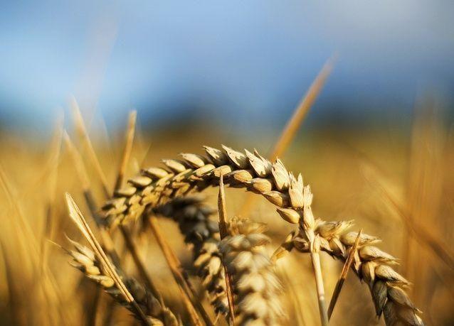 تقرير: تغير المناخ يعرقل إمدادات الغذاء ويكبح النمو الاقتصادي