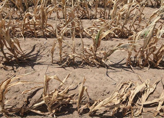 موجة جفاف في الشرق الأوسط قد تشعل أسعار الغذاء
