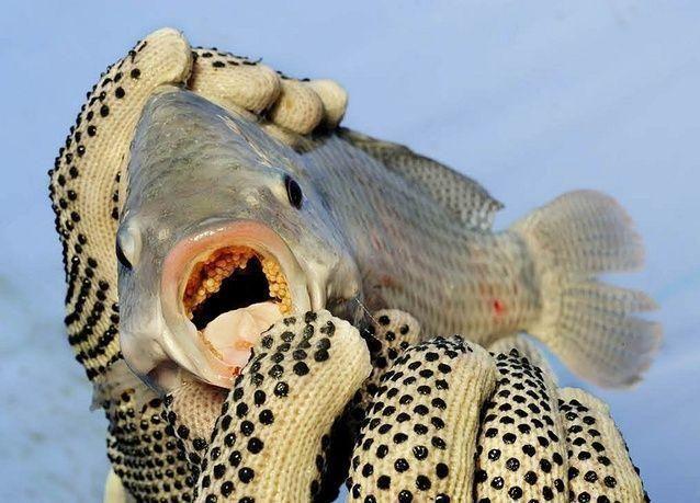 بالصور: ازدهار مزارع الأسماك المفتوحة حول العالم