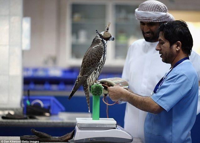 بالصور: مستشفى صقور أبو ظبي، الأكبرعالمياً