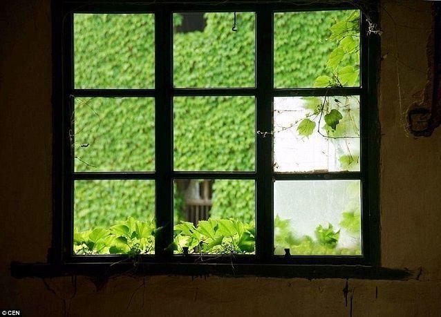 بالصور: غزو رائع للطبيعة في قرية مهجورة بالصين
