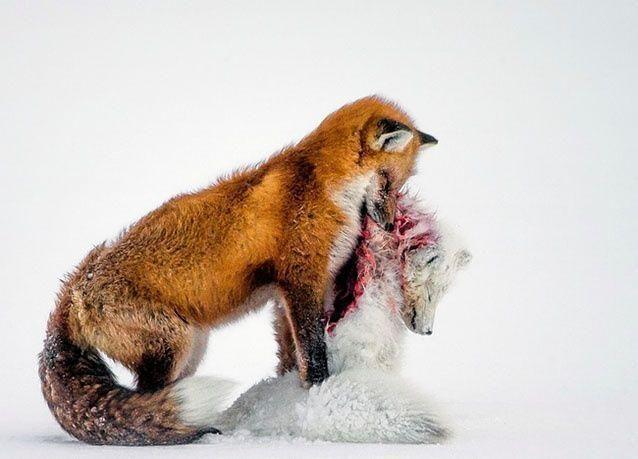 الصور الفائزة بمسابقة الحياة البرية 2015