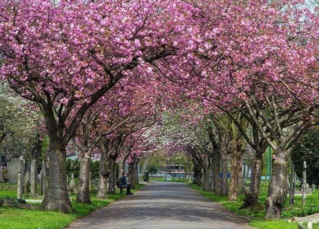 بالصور : أجمل ممرات الأشجار حول العالم