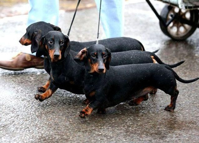 الكلاب لتوقع الزلازل في الصين