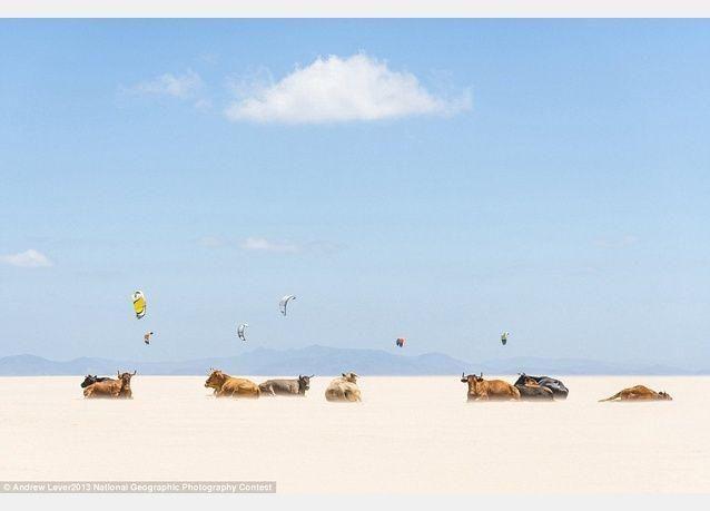الصور الفائزة فى المسابقة السنوية لناشيونال جيوغرافيك