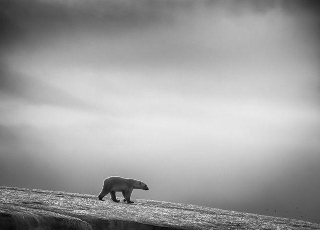 الترشيحات النهائية لجائزة سوني للتصوير 2014 .. بالصور