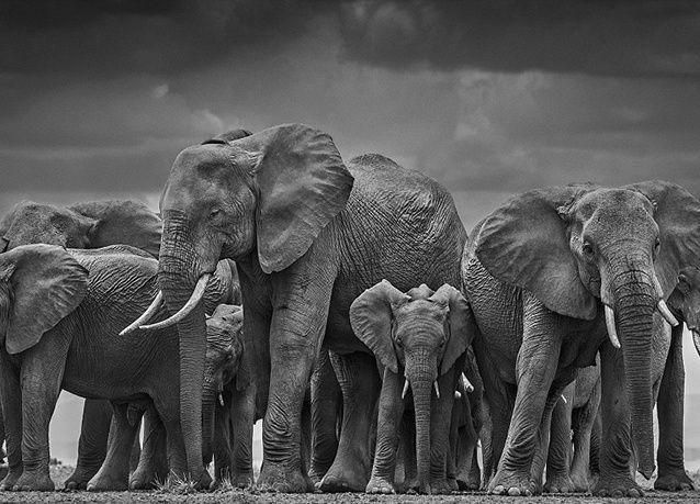 بالصور : لقطات مذهلة للحياة البرية بالأبيض والأسود