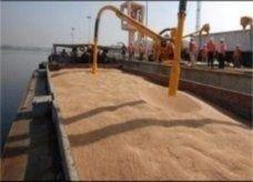 مصر تشتري 295 ألف طن من القمح