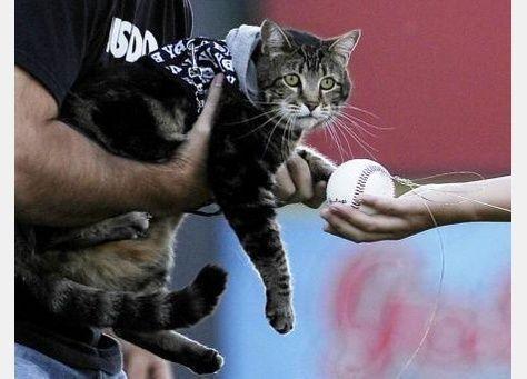 فريق امريكي يسوّق لحضور مباراته بمنح قطة أنقذت طفلا شرف افتتاح المباراة