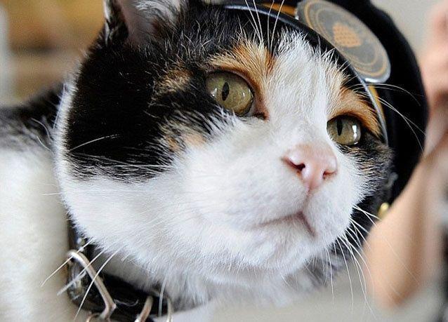 """بالصور : القطة """" تيناما """" تدير محطة القطار الجديدة في اليابان"""