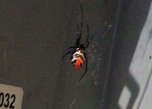 عناكب الظهر الأحمر تنتشر في مجمعات سكنية في دبي