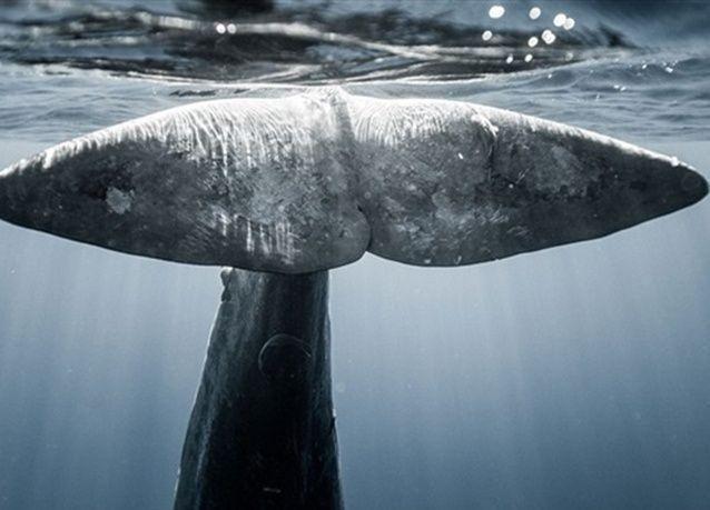 بالصور : غواصان يواجهان المخلوقات البحرية تحت الماء