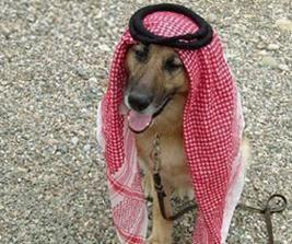 كلب يرتدي زياً سعودياً يثير أزمة في منتدى علمي
