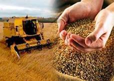 12.3 مليار دولار حجم الاستثمارات الزراعية السعودية